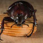【ミッシングリンク】ずーっと考えていたこと。地球に存在する昆虫たちはどこからやってきたのか?そしてどこへ向かうのか・・・【昆虫宇宙人説】