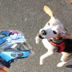 【愛犬おすすめハーネス】Tre Ponti(トレポンティー)かっこよくて丈夫なイタリア製ハーネスの使い勝手は?