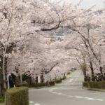 【宝塚市の桜の名所と穴場】おすすめの花見スポットの歩き方をこっそり教えます