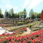 【伊丹】荒牧バラ公園は満開でした!駐車場や施設などバラの見どころを紹介するよ♪