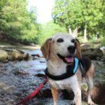 【兵庫県朝来市】愛犬と川遊びできる黒川渓谷(魚ヶ滝)へ行ってきた