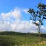 【秋吉台で犬のお散歩】3億5,000万年かけて生れた絶景は、まさに大地のアートだった!