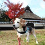 【丹波並木道中央公園】愛犬と散歩できる森の中にある特大スケールの公園