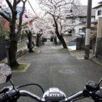 2020年はバイクで通り抜けた寿楽荘の桜のトンネル