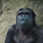 動物は「死」についてどのようにとらえているのか?