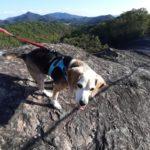 【シニア犬】今シーズンも宝塚西谷の森公園でリハビリ開始