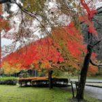 【兵庫県多可町】偶然みつけた至福の紅葉スポット