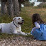 【保護犬】里親に出す理由「引っ越し」に憤りを隠せない!